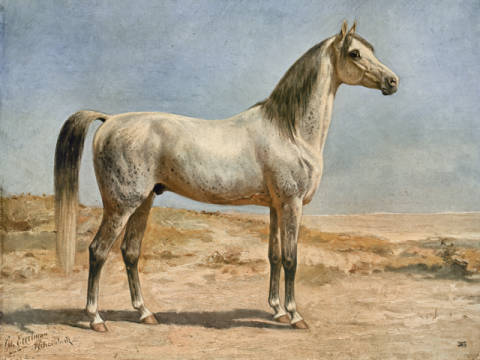 Arabian Horse. of artist Otto Eerelman as framed image