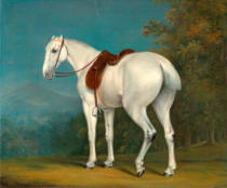 Jacques-Laurent Agasse - A Lady's Grey Hunter