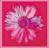 Daisy, c. 1982 (crimson and pink) von Andy Warhol