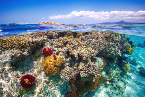 Mayotte : The Reef of artist Barathieu Gabriel as framed image