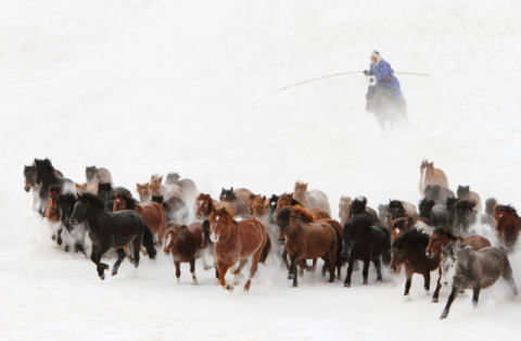 Foto-Kunstdruck: Adam Wong, Horse run in the snow