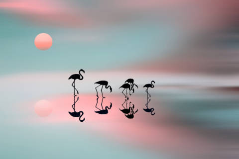 Family flamingos of artist Natalia Baras as framed image