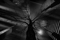Jackson Carvalho - The Nature in the City