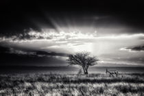 Piet Flour - Sunrise with hartebeest