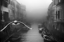 Stefano Avolio - Seagull from the mist