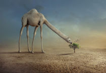 sulaiman almawash - Camel and Tree