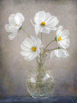 Mandy Disher - Simply Cosmos