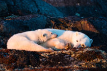 GIORGIO DISARO - Mother and cub are resting at sunset