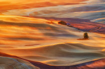 Lydia Jacobs - Golden Palouse