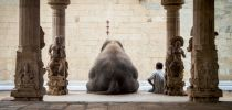 ruhan - The Elephant & its Mahot