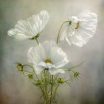 Mandy Disher - Cosmos Charm