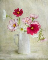 Mandy Disher - Cosmos carnival
