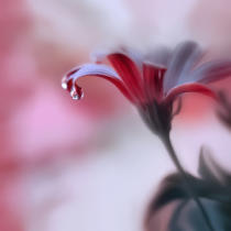 Juliana Nan - Invisible Touch...