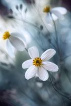 Mandy Disher - Cosmos