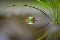 Kutub Uddin - Beauty of Reflection