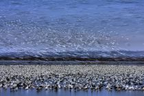 Jun Zuo - Before Dawn - A Day of Snow Goose Migration