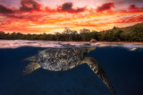 Barathieu Gabriel - Green turtle and fire sky!