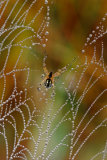 Luigi Chiriaco - The pearls of the spider