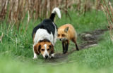 Mircea Costina - World\'s worst hunting dog