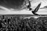 Pigeons on the Empire State Building von SergioSousa