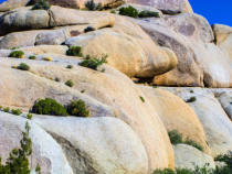 Joerg Hackemann - Joshua tree with rocks in Joshua tree national park