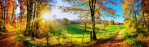 Farzin Salimi - Enchanting landscape in autumn: sunny panorama of a rural idyll