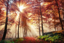 Farzin Salimi - Fascinating light mood in a colorful forest in autumn with sunshine in the fog
