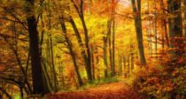 Farzin Salimi - Forest in autumn with pleasant warm colors,a path leads into the scene