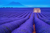 Fesus Robert - Stone hut on lavender field in Provence